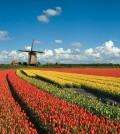 vakantie-in-nederland
